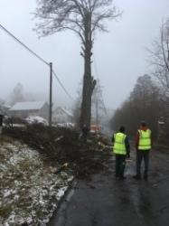 Rizikové kácení stromů Pardubice
