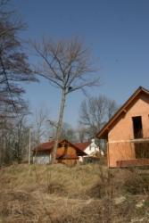 Rizikové kácení stromů v Černilově