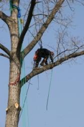 Rizikové kácení stromů Černilov