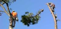 Kácení Stromů v Opočně